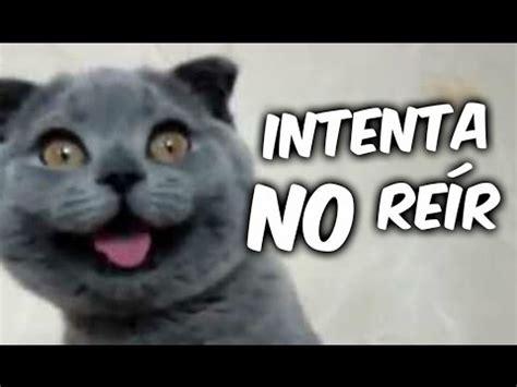 imagenes y videos graciosos animales chistosos y graciosos 02 v 237 deos de risa de