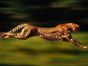 How Fast Does A Jaguar Run Cheetah Running Wallpapers Running Cheetah My Style