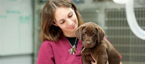 veterinary assistant description duties