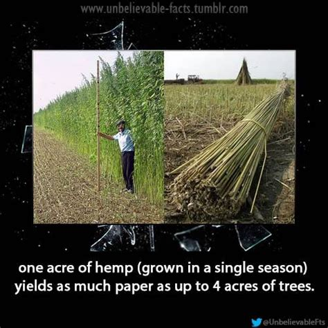 How To Make Hemp Paper - environment does one acre of hemp yield as much paper as