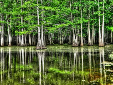 Southern Home Decor Blogs by Southern Swamp Photograph By Ester Rogers