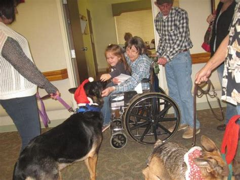 therapy program k9 services german shepherd rescue