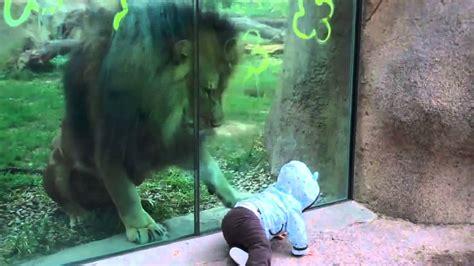 video kartun kebun binatang dan belajar berhitung bahasa hewan lucu 2016 vidio kebun binatang images