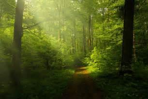 light and landscape free photo light forest rays landscape free image on