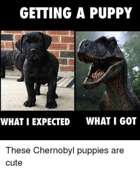 chernobyl puppies what i expected what i got memes of 2017 on sizzle