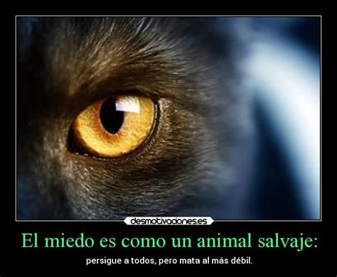 imagenes de animales salvajes con frases imagenes de animales salvajes con frases imagui
