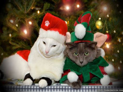 wallpaper cats christmas free christmas wallpaper with cats wallpapersafari