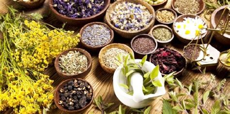Top Detox Herbs by Top 6 Herbs To Detoxify Our Tipsoye