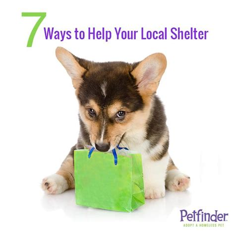 8 Ways To Help Out Your Local Animal Shelter by Shelters The Only Way And Adoption On