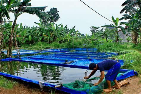 Kolam Terpal file kolam terpal 02 jpg wikimedia commons