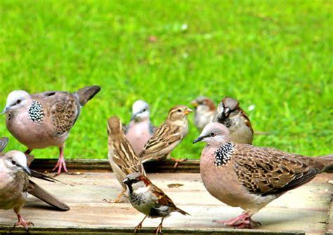 beware of the backyard bird feeder conservation