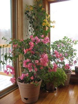 love    plants blooming year