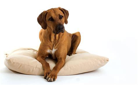 housing for dogs flooring tips for dog loving homes houston pettalk
