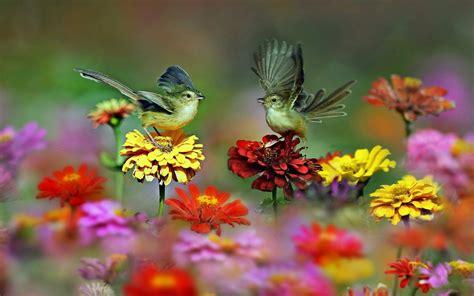 wallpaper flower bird download tiny birds and flowers wallpaper for desktop