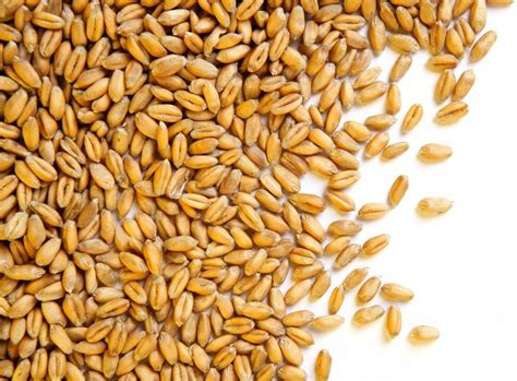 what are wheat berries and what can i do with them