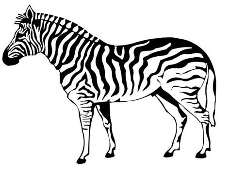 printable zebra pics printable zebra coloring sheets zebra coloring pages to