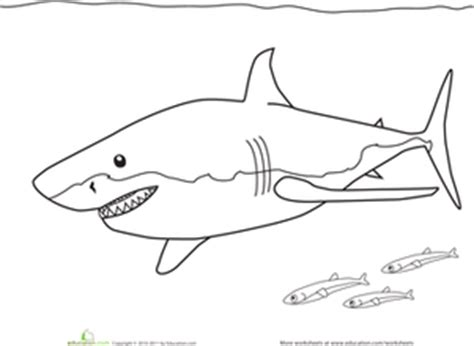 color the great white shark worksheet education com