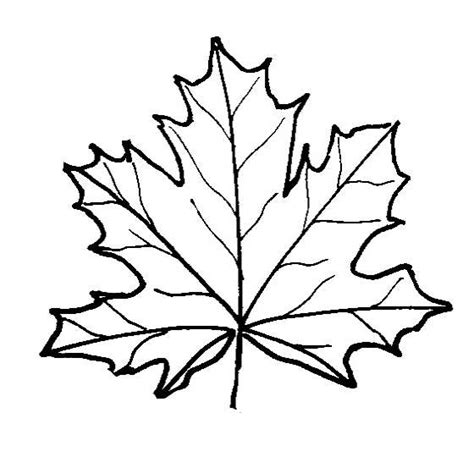 coloring page of a maple leaf leaf coloring pages