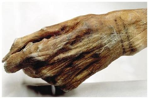 oldest known tattoos found on oetzi the iceman secret