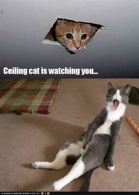 Ceiling Cat Is You ceiling cat is you cats the grey and the o jays