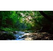 Beautiful Forest Sunlight Amazing View HD Wallpaper