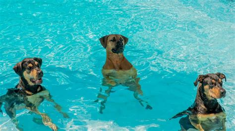From The Adoptable Pets Photo Pool You Are A by 5 Weather Hazards For Dogs And How To Help The