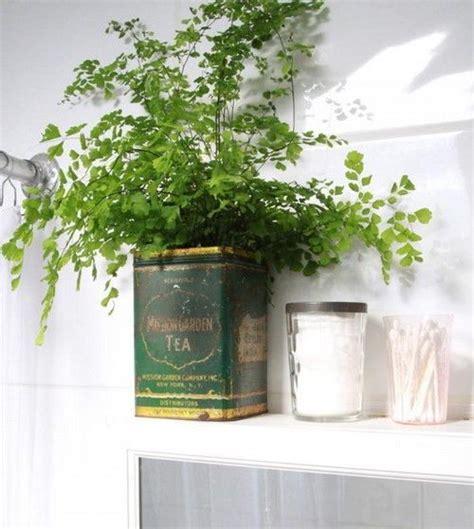 piante per bagno piante in bagno quali scegliere e come valorizzarle