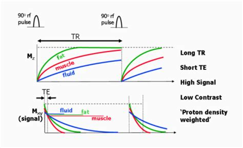 mri proton density proton density weighted spin echo t1 and t2 relaxati