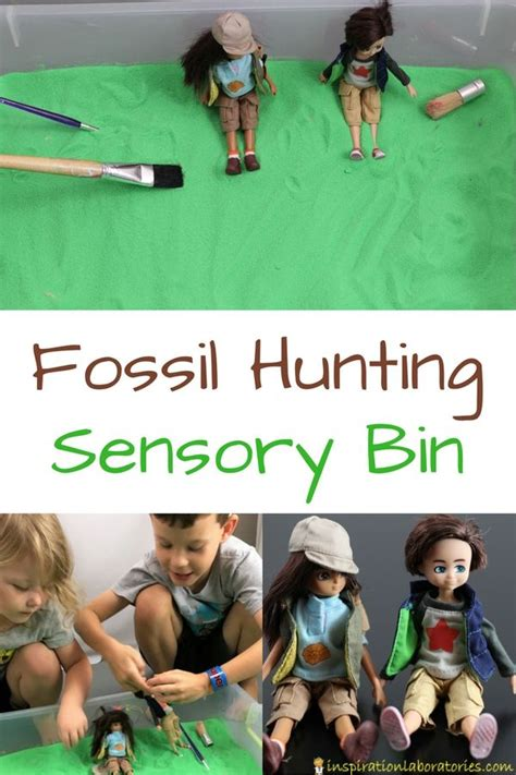lottie doll paleontologist 2056 best sensory ideas for images on