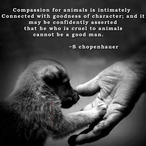 my pet connection inspirational â tailsâ of adoption books compassion for animals quotes