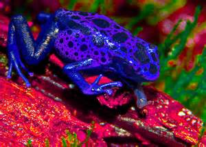 colorful frog colorful frog a new twist on an favorite here s the