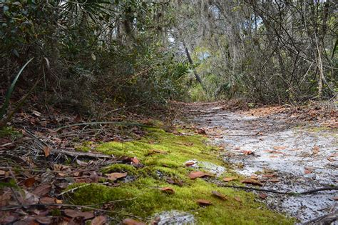 the and archaeology of florida s wetlands telford press books nature trail info map florida historical society