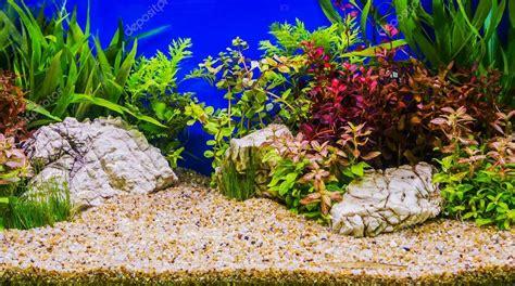 Aquarium Inrichting Ideeen by Inrichting De Prachtige Tropische Beplante Zoetwater