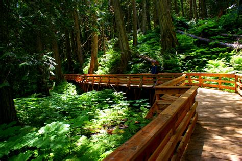forest backyard backyard travel ancient forest british columbia canada life love and adventure
