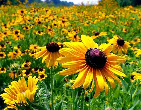flower in bloom flower pictures flowers in bloom