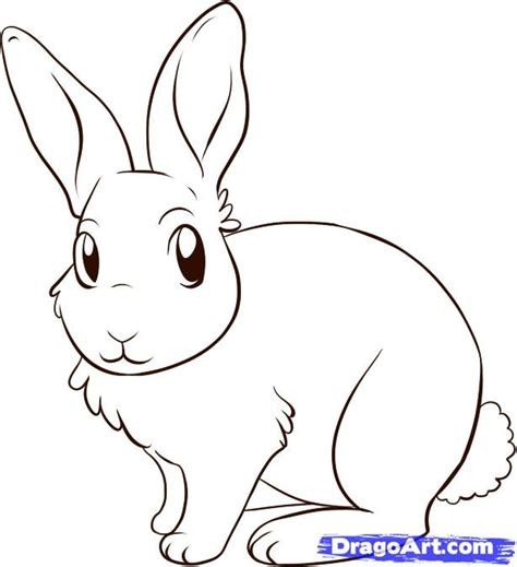 how to a rabbit how to draw a bunny rabbit step by step forest animals animals free drawing
