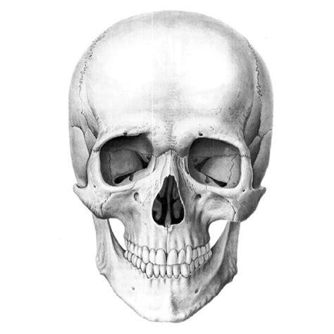 imagenes de calaveras humanas кости головы кости черепа и лица