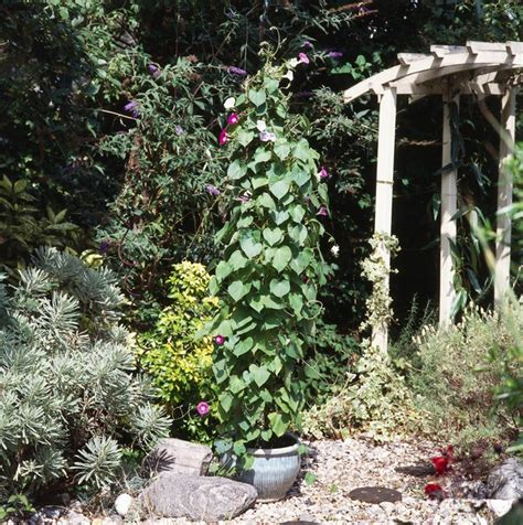 Container Gardens Pinterest - cottage style container gardens
