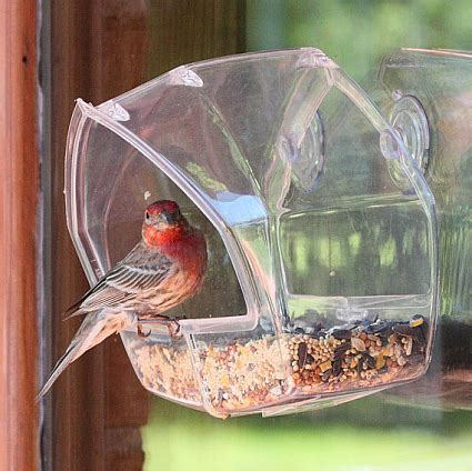 birdscapes clear window feeder twin pack window mount