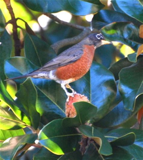 birds of williamsburg virginia