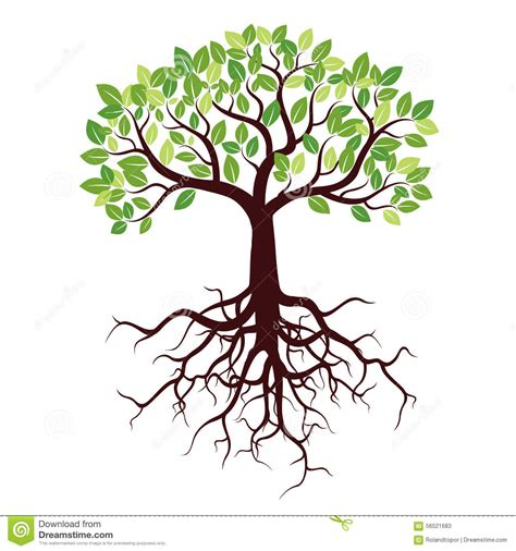 Tree with roots and leafs stock illustration image