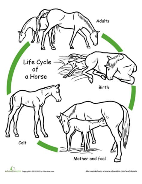 animal life cycle coloring pages | education.com