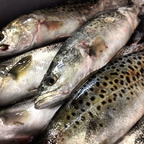 speckled trout locals seafood