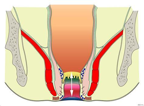 sfintere anale interno anatomy of the region colon explorer