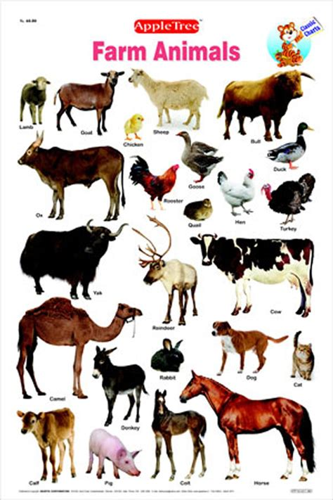 new year animal names farm animals chart for www imgkid the image