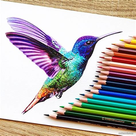color sketch kingfisher color pencil drawing by danstirling