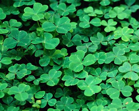 st patricks day st s day promotion augie s family style italian restaurant