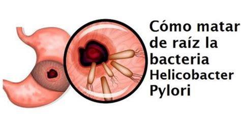 el da que se b01mrxgbqk c 243 mo matar la bacteria helicobacter pylori con esta receta