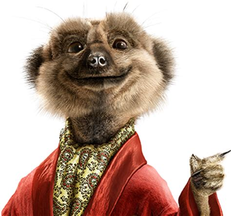 compare the meerkat house insurance arman info