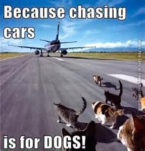 Funny Dog Chasing Cat